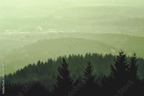 Panoramic View Of Pine Trees On Mountain