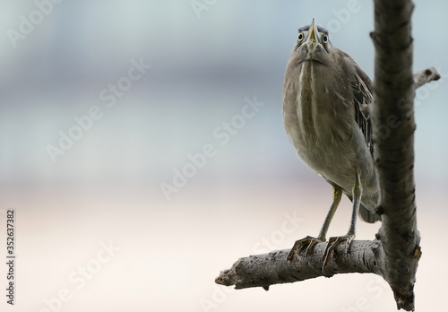 Foto Close-up Of Heron On Branch