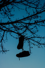 Low Angle View Of Shoes Hanging On Bare Tree