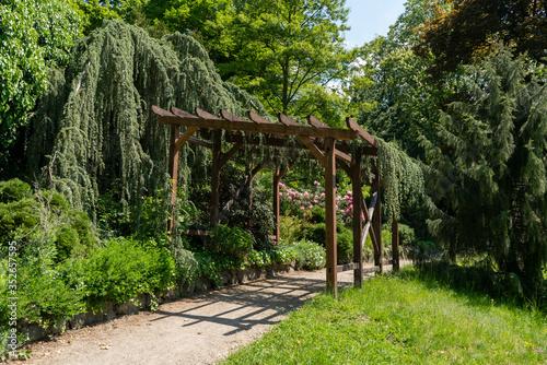 Carta da parati wood arbor in the park