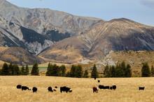 New Zealand, Neuseeland,  Sout...