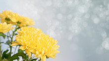 Bouquet Of Yellow Mothers Chrysanthemums In A White Vase On A Light Blue Background.