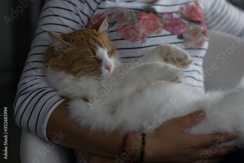 Fototapeta Midsection Of Woman With Cat At Home obraz