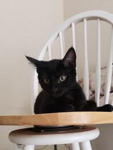Portrait Of Black Cat Sitting On Table