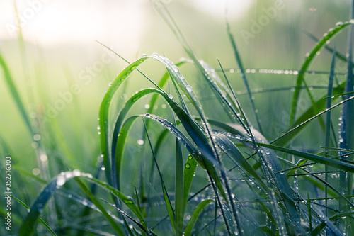 Fotografia Close-up Of Water Drops On Grass