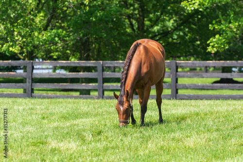 Horse grazing on a farm