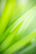 Leinwandbild Motiv Beautiful attractive nature view of green leaf on blurred greenery background in garden with copy space using as background natural green plants landscape, ecology, fresh wallpaper concept.