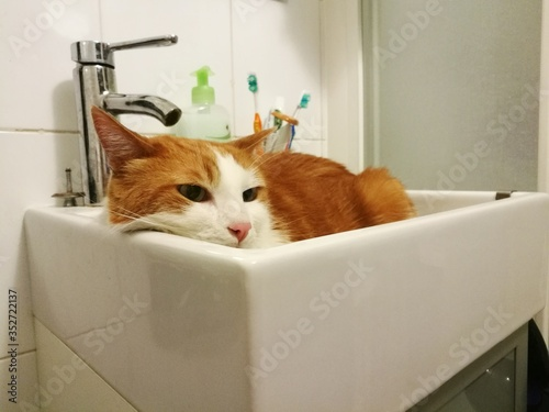 Fotografiet Close-up Of Ginger Cat In Sink