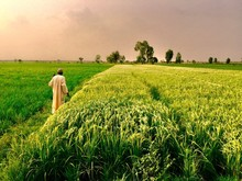 Rear View Of Man Standing In Farm