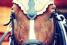 Close-up Of Brown Horse