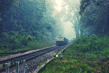 Train On Railroad Track Amidst Trees In Forest