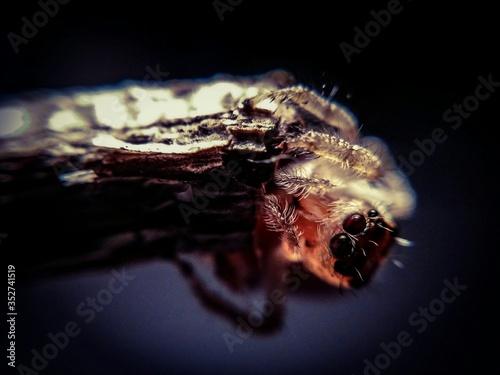 Valokuva Portrait Of Spider