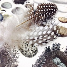 High Angle View Of Feathers With Pebbles And Bird Nest