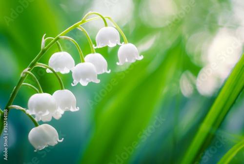 Obraz Close-up Of White Flowering Plant - fototapety do salonu