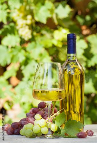Fotografie, Obraz Colorful grapes and white wine
