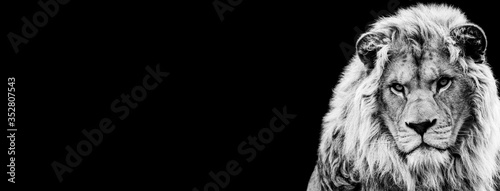 Template of Lion in B&W with black background Poster Mural XXL