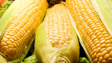 Closeup Image Of Wet Corn Ears...