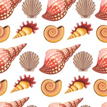Seashell And Conch, Sealife An...