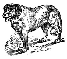 Dog, Vintage Illustration.