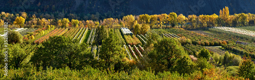 Orchards (apple and pear trees) in autumn near the village of Remollon (Panoramic) Canvas Print