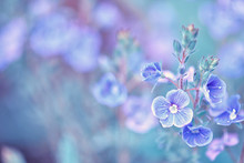 Spring Flowering Background. Beautiful Nature Scene With Small Flowers And Sun Flares. Sunny Day. Spring Flowers. Abstract Blurred Background. In The Spring. Toning Design Spring Nature, Sunny Plants.