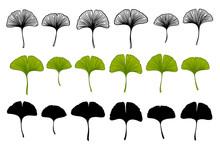 Ginkgo Biloba Leaves Set