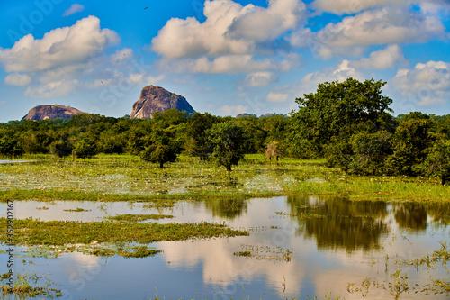 Obraz Yala National Park landscape Sri Lanka Ceylon - fototapety do salonu
