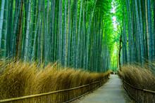 日本 京都 嵐山 竹林の...