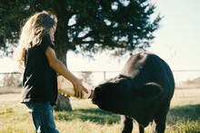 Young Girl Bottle Feeding Black Calf, Farm Lifestyle Close Up.