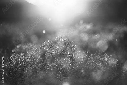 Abstract dreamy landscape plants close up at sunset, wanderlust environment.