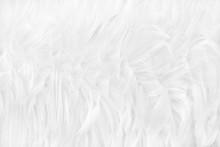 Beautiful White Grey Bird Feat...