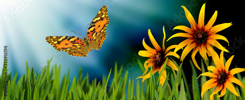 image of flowers and a flying butterfly #352916194