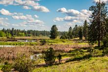Wetlands Of Turnbull National Wildlife Refuge