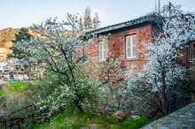 In The Spring, An Old Village Has A Rest From Tourists. Flowering Trees Rustle Gently In Silence And A Mountain River Gurgles On Stones.