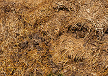 Pile Of Dry Horse Manure