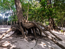 The Roots Of The Tree Intertwi...