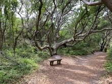 Bench Under Live Oak