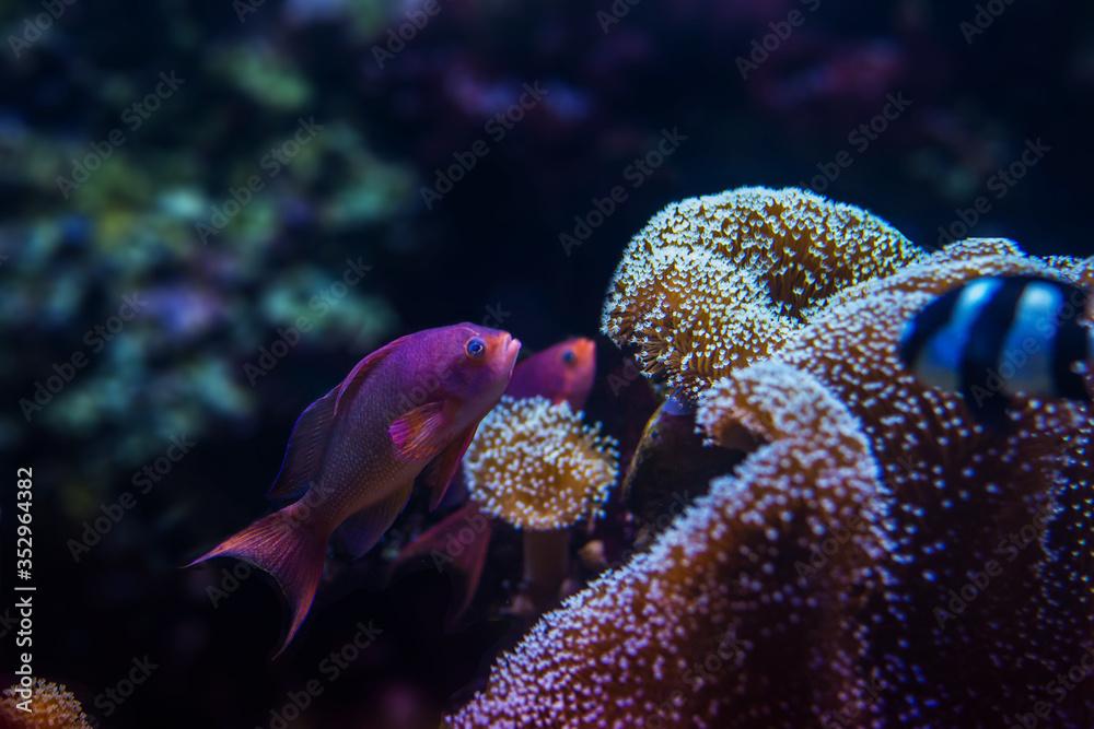 Fototapeta Akwarium Gdyńskie, ryby, żółwie, koralowce
