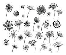 Hand-drawn Doodle Set Of Dande...