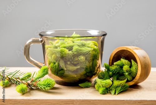 Conceptual image of using fresh young spruce tree (Picea abies) shoots for food and drink Canvas Print