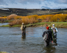 Four Men Walking Through A Cattle Ranch To Go Fly Fishing.