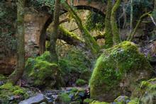 An Old Stone Bridge Swallowed ...