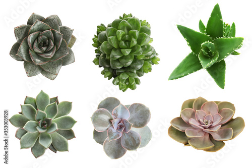 Foto Collage with different succulents on white background, top view