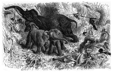 Elephant Hunting In Africa, Vintage Illustration.