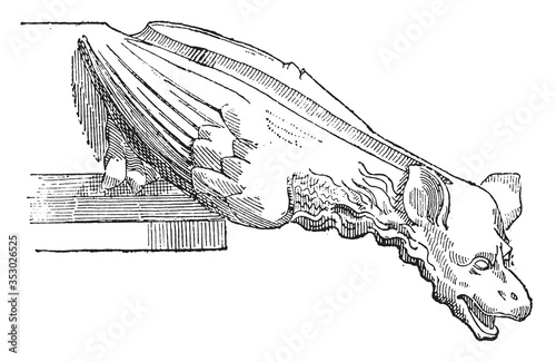 Photo Gargoyle of the Sainte-Chapelle in Paris (XIII century), vintage illustration