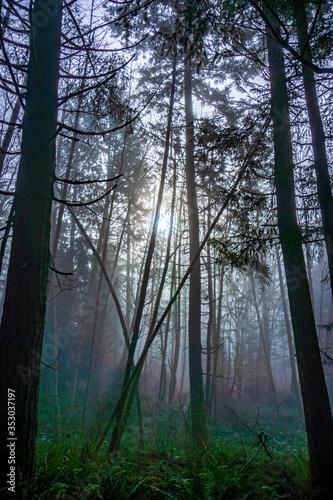 sun through foggy forest