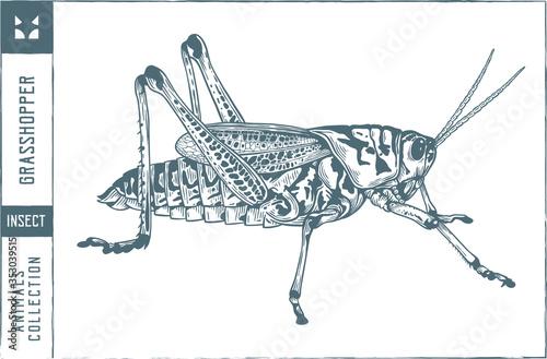 Wallpaper Mural Grasshopper Vector illustration - Hand drawn - Out line