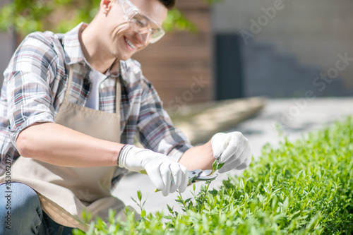 Obraz na plátne Involved dark-haired male in protective glasses and gloves pruning bushes outsid