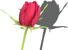 Single Red Rose Bud With Dark ...