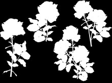 Four Rose Silhouettes Isolated...